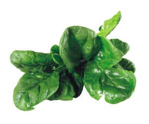 spinach-opt